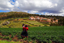 Quechua woman wearing traditional dress walking through potato field, village and terraces of Inca site in background, Chinch...