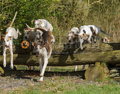 The Quorn Hunt at Blackhill Farm 10/3
