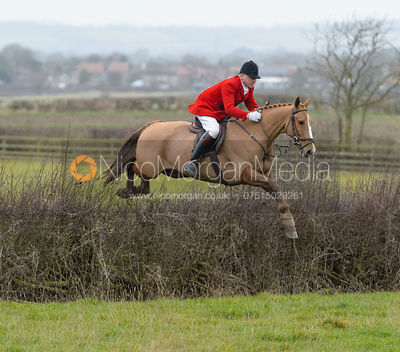 Michael Dungworth jumping a hedge at Sheepwash - The Belvoir at Mount Pleasant