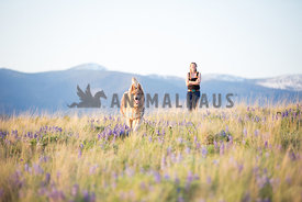 woman watching dog run through wildflowers in mountain meadow