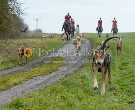 Huntsman and hounds at Knossington Spinney - The Fitzwilliam Hunt visit the Cottesmore at Burrough House