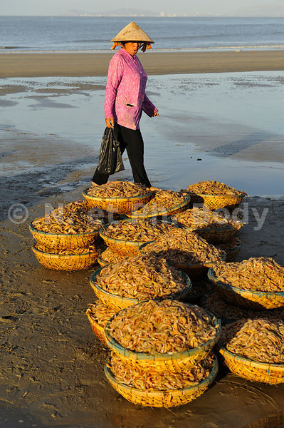 VIETNAM, PLAGE DE LONG HAI, PECHEURS//Vietnam, Long Hai, fish market on the beach