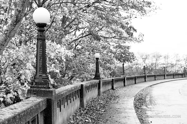 SEATTLE MARSHALL PARK SEATTLE AUTUMN FALL BLACK AND WHITE