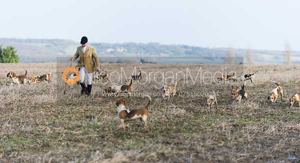 Bassets head off from the meet