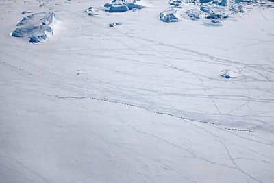 Aerial view of Emperor penguins (Aptenodytes forsteri) toboganning in the snow, Snow Hill Island, Weddell Sea, Antarctica,