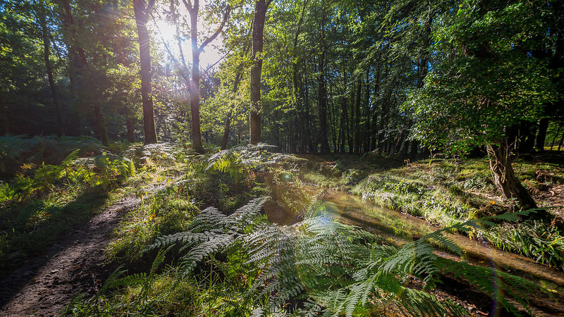 Sunlight On Forest Floor and River with Sun Flare