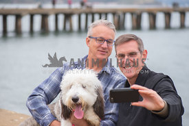 2 adult caucasion men taking a selfie with their large sheepadoodle puppy