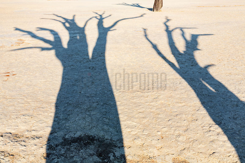 Shadows of Dead Camelthorn Trees at Dead Vlei