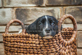 puppy stuck in basket
