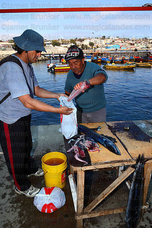 Man buying freshly caught snoek ( Thyrsites atun ) , Caldera , Region III , Chile