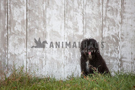 dog sitting in front of white wood barn wall
