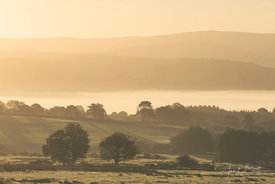 Early morning mist, Cors Caron