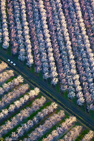Almond Orchards in Bloom from the Air #20
