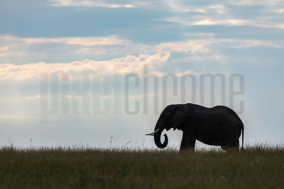 Solhouette of an Elephant on the Serengeti Plains