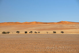 Red sand dunes and trees in desert