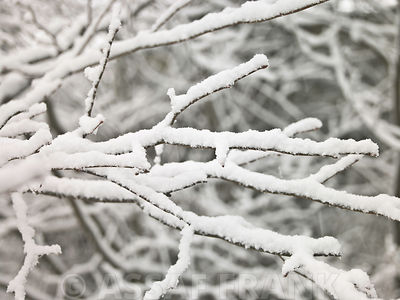 Twigs and branches with snow