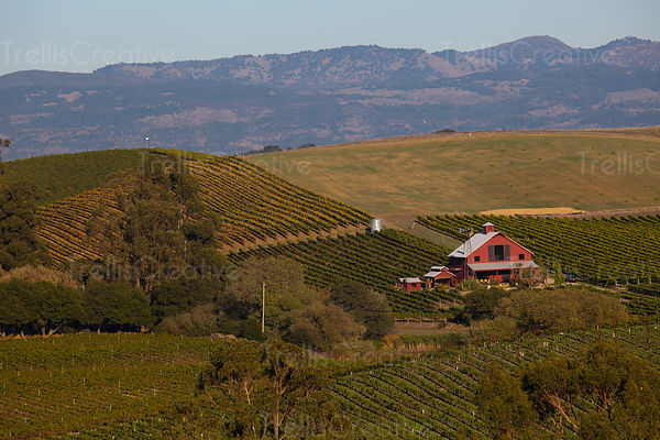 Aerial view of big red barn amid vineyards in Carneros AVA Napa Valley