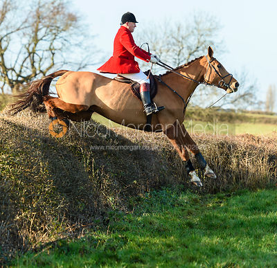 James Mossman Jumping a big drop hedge.The Quorn at Barrowcliffe