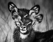 02485-Young_Kudus_Laurent_Baheux