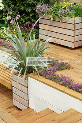 Aromatic plant, Container, garden designer, Perennial, Stair, Terrace, Thyme, Window box, Contemporary Terrace, Digital, Silver spear