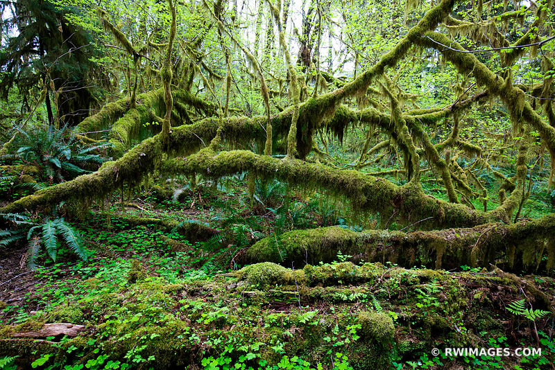 Olympic National Park Washington - All Photos