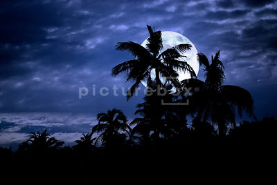 An atmospheric image of palm trees on an tropical island silhouetted in front of a large full moon.
