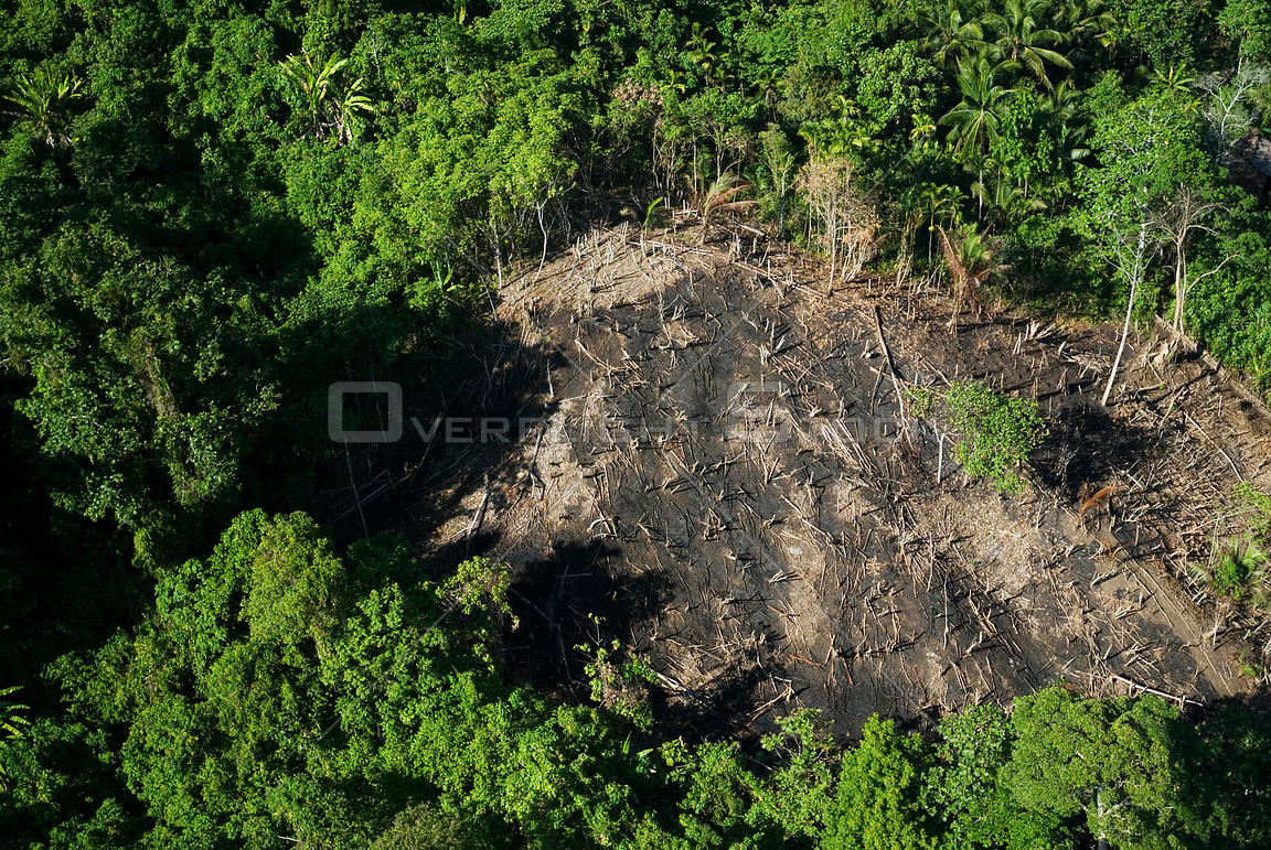 Aerial view of deforested area in rainforest, Papua New Guinea, August 2007