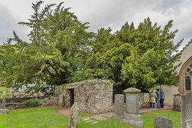 Yew Tree Fortingall