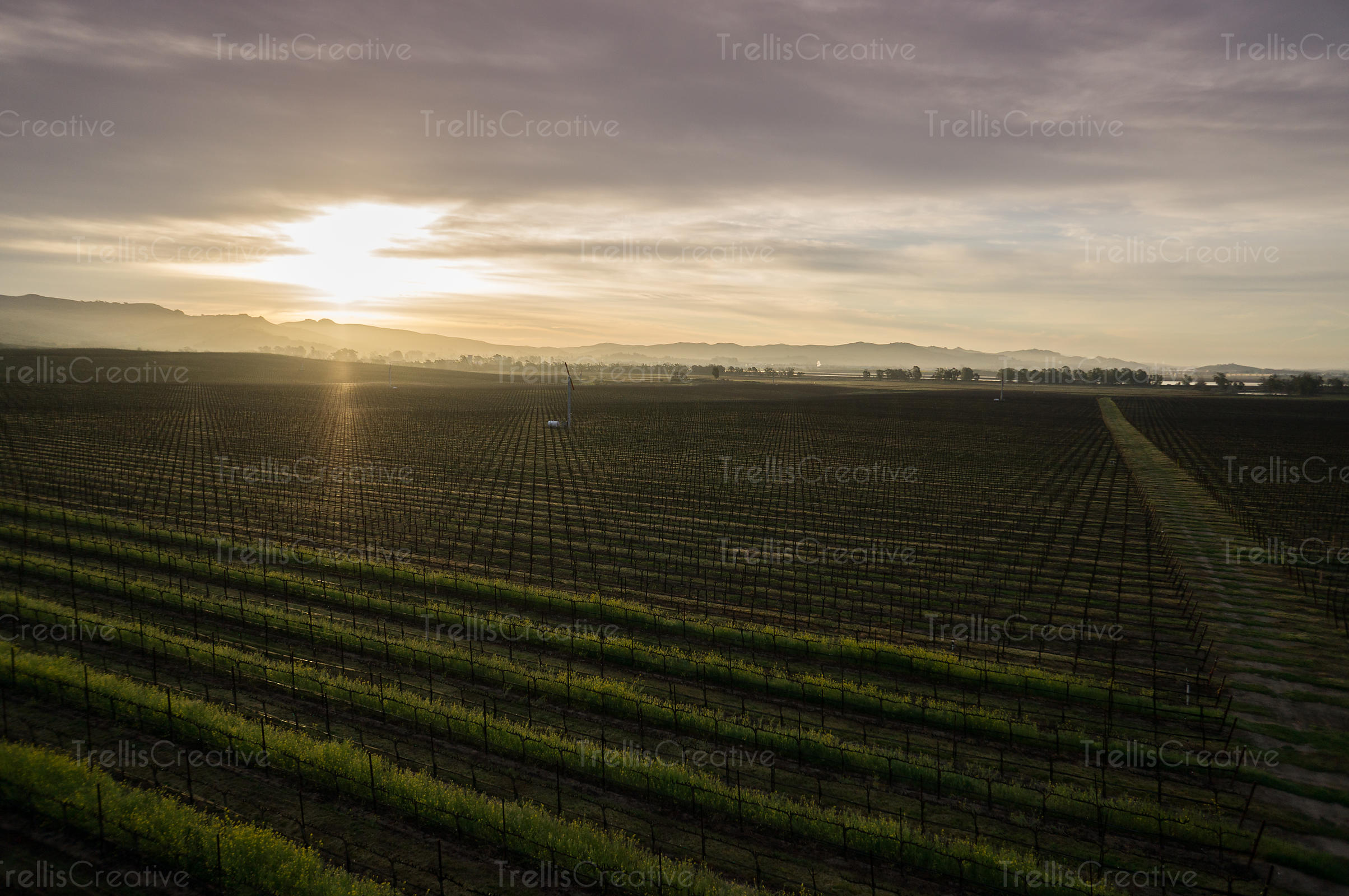 Sun breaking through the clouds over the vineyard at sunrise