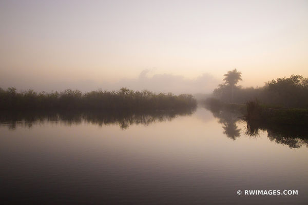 EARLY MORNING ROYAL PALM EVERGLADES NATIONAL PARK FLORIDA LANDSCAPE