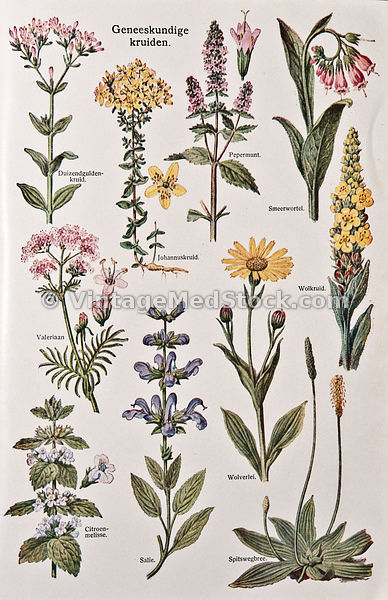 Medical Botany medical-botanies