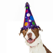Happy Birthday Dog Wearing Party Hat