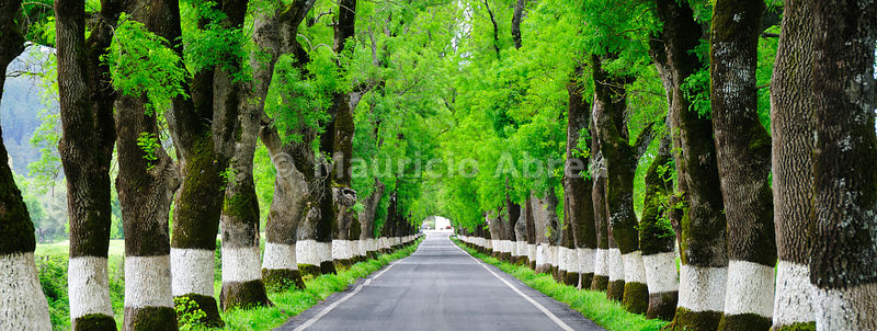 Trees on both sides of a road, Marvão, Portugal