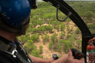 Helicopter pilot flying over Elephant (Loxodonta africana) herd. The Elephants were about to be darted for relocation to the ...