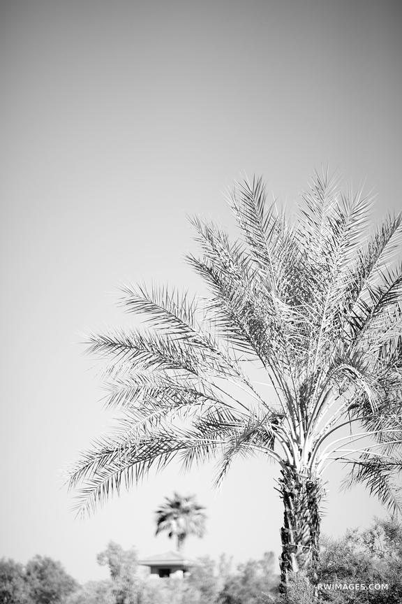 PALM SPRINGS CALIFORNIA BLACK AND WHITE VERTICAL