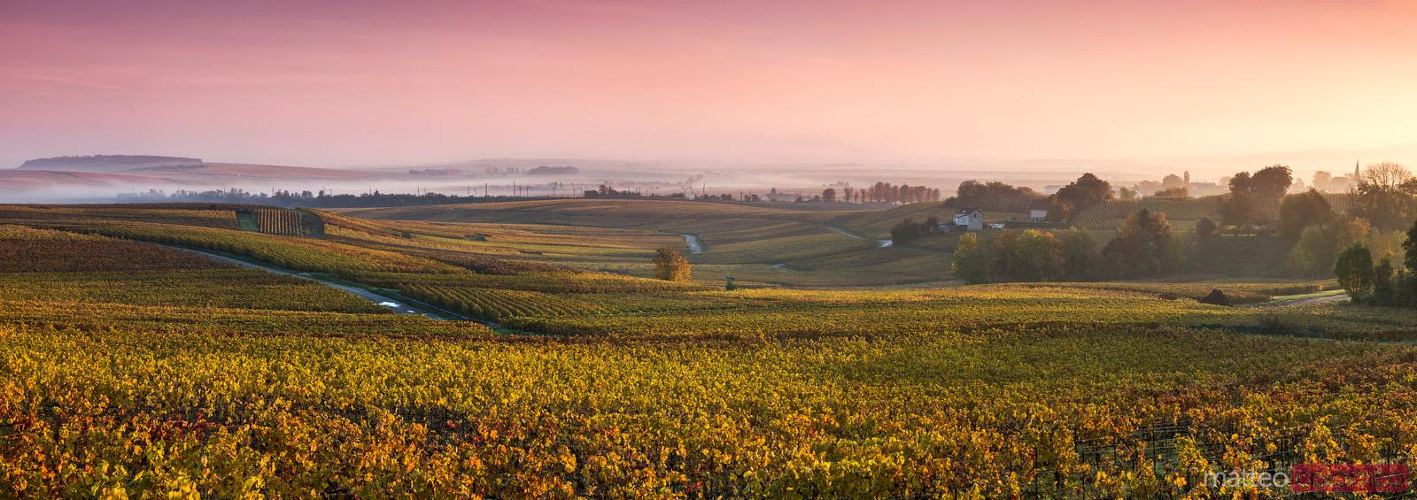 Panoramic of vineyards in autumn at dawn, Champagne, France