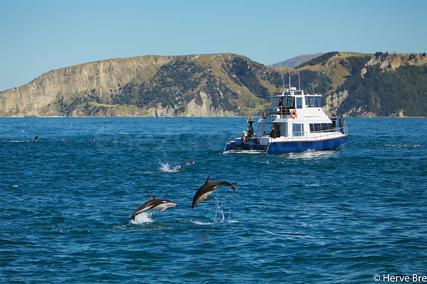 Dolphins watching in New-Zealand