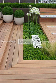 Agapanthus, Ball shaped, Buxus, Container, Contemporary garden, Pot, Sphere shaped, Topiary, Common Box, Wooden Terrace, Digital
