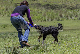 woman and Border Collie pulling on a blue frisbee