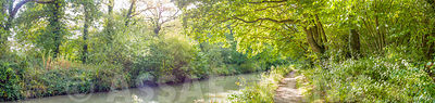 Basingstoke canal, Hampshire