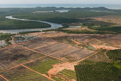 Aerial view of palm oil plantations (Elaeis guineensis). Sabah, Malaysia, June 2009