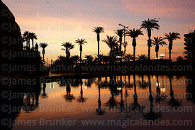 Palm trees at sunset in Plaza Vicuña Mackenna, El Morro headland on left, Arica, Region XV, Chile