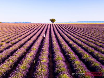 Woman in a lavender field in Provence, France