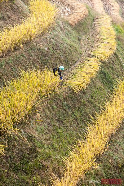 Worker on terraced rice paddy, Longsheng, Guilin, China