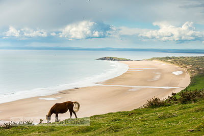 Horses at Rhossili Bay - BP3601