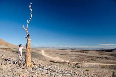 One man standing next to a lone dead quiver tree (Aloe dichotoma) in the desert, stroking the trunk, fallen branches lying on...