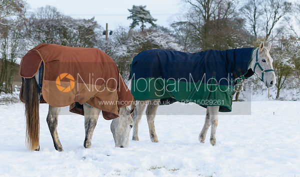 Grey horse with rug in the snow