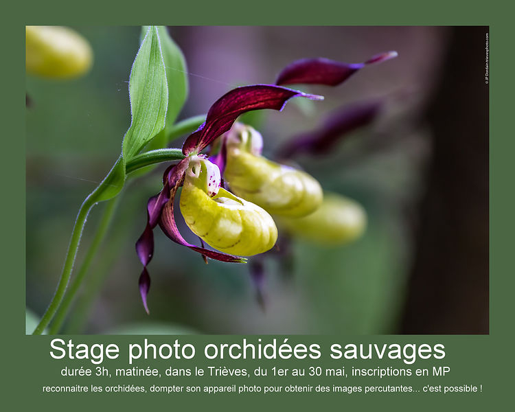 Stage photo orchidées