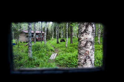 Bear view from the hide