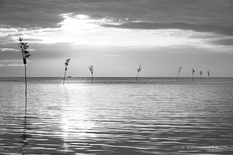 CLAM TREES SUNSET ROCK HARBOR ORLEANS CAPE COD BLACK AND WHITE